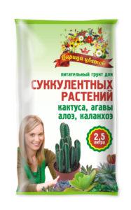 Царица цветов_суккуленты_2,5