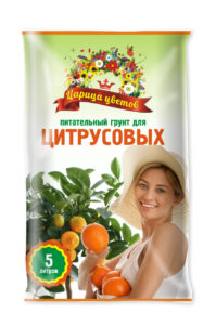 Царица цветов_цитрусы_5